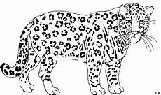 Ausmalbilder Leopard Ausdrucken Ausmalbilder Leopard Gepard Zum Ausdrucken Ausmalen