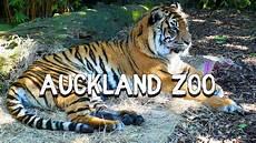 am zoo auckland zoo new zealand
