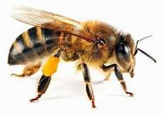 Lebah Inspirasikan Sinar Matahari Jadikan Energi Sel Surya