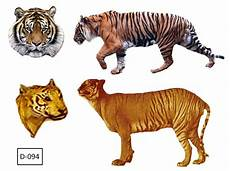 Ahmad Xtreme Harimau Jawa Masih Ada Ataukah Sudah Punah