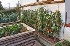 tomaten im hochbeet hochbeete