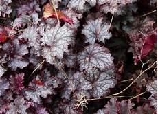winterharte stauden als topf und k 252 belpflanzen