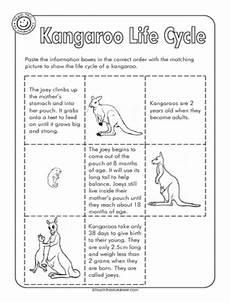 kangaroo life cycle kendall school life cycles tree life cycle grade 2 science