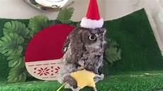 owl merry christmas youtube