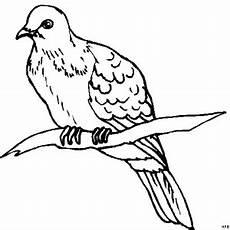 Malvorlage Vogel Auf Ast Vogel Ruht Auf Ast Ausmalbild Malvorlage Tiere
