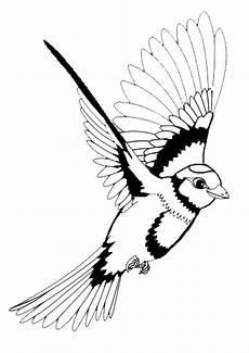 ausmalbilder vogel kostenlos malvorlagen zum ausdrucken