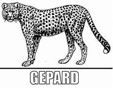 malvorlage gepard