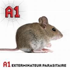 Exterminateur De Souris Exterminateur Longueuil Et La Rive Sud Exterminateur