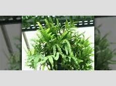 How to Grow ferns indoors « Gardening :: WonderHowTo