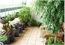 Plante De Balcon Pivoine Etc