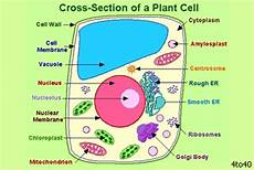 what is a cell wall quora