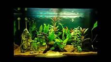 juwel 125 aquarium