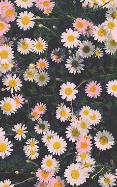 iphone floral wallpaper wallpaper search floral wallpaper