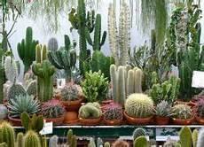 wie oft kaktus gießen wie oft sollte ich den kaktus gie 223 en hounslowtw3 net