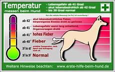 hund fieber messen erste hilfe beim hund temperatur messen