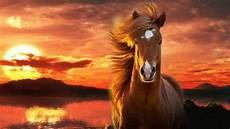 Schöne Pferde Bilder - sch 246 ne pferde bilder die die gro 223 artigkeit der pferde zeigen