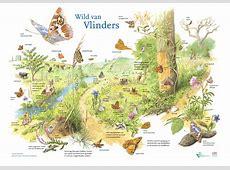 Wild van Vlinders   ARK Natuurontwikkeling