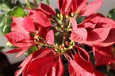 pflanze mit roter blüte kostenlose bild rote bl 228 tter pflanze blume garten