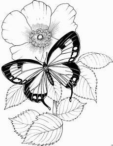 Ausmalbilder Schmetterling Blume Schmetterling Mit Blume 2 Ausmalbild Malvorlage