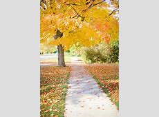 Free photo: Sidewalk, Yellow, Tree, Walkway   Free Image