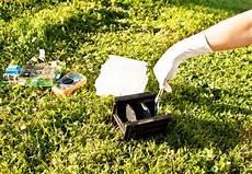 was hilft gegen ameisen im rasen unkraut im rasen bek 228 mpfen tipps und ratgeber obi
