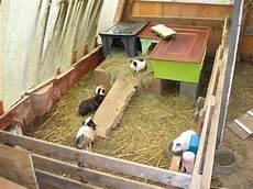 Cabane Cochons D Inde 1 Mignons Cochons