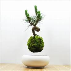 Bonsai Baum Kaufen - buy a floating bonsai tree home and garden designs
