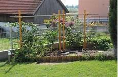 Rankhilfen Für Kletterpflanzen - rankhilfe f 252 r himbeeren und brombeeren pergola ps