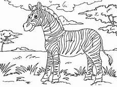 malvorlage zebra kostenlose ausmalbilder zum ausdrucken