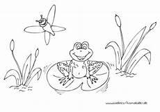 Ausmalbild Frosch Am Teich Froehlicher Frosch Im Teich Mit Libelle Nadines Ausmalbilder