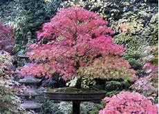 10 Best Plants For Designing A Japanese Garden Gardenoholic