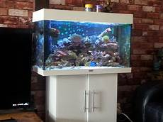 juwel 125 marine reef aquarium in knightswood
