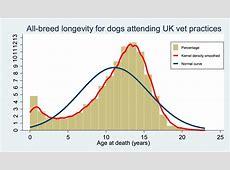 Hoe oud wordt een hond?   Medisch Centrum voor Dieren