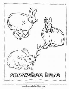 arctic animals printable coloring pages 17219 arctic animals coloring pages for preschoolers at getcolorings free printable colorings