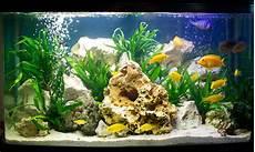 99 Gambar Aquarium Ikan Hias Minimalis Cantik Beserta Ikan