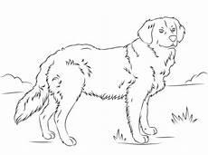 Ausmalbilder Hunde Golden Retriever Ausmalbilder Golden Retriever Welpen 1ausmalbilder