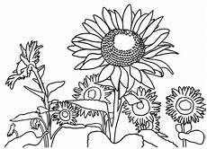 Fantastis 30 Gambar Bunga Hitam Putih Untuk Diwarnai
