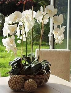 orchideen deko ideen deko mit orchideen moderne ideen ideen top