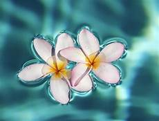 Tropical Flower Wallpaper Hd by Flower Wallpapers Wallpaper Cave