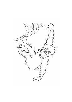 lustige ausmalbilder affen malvorlage affe 196 ffchen tiere zum ausmalen ausmalen