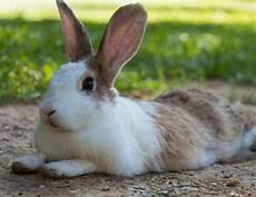 kaninchen zahnpflege tierische tipps