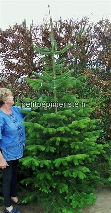 achat sapin nordmann a planter 93312 sapin planter prix
