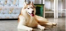 Hundegeruch Entfernen Wohnung - hundegeruch aus wohnung entfernen so geht es