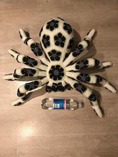Afrikanische Muster Malvorlagen Pdf Muster Hakeln Spinne Pdf Geburtstag Geschenk