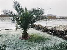 Palmen Für Den Garten - 5 winterharte palmen f 252 r nachhaltiges gartengr 252 n fresh