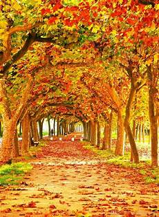 Photography Girly Fall Backgrounds