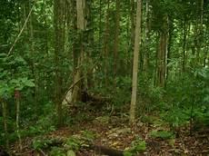 Mengenal Hutan Johnalexiss S