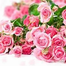 fiore compleanno fiori compleanno regalare fiori quali fiori scegliere