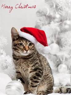 merry christmas pictures with cats selected christmas excellent cakes merry christmas latest cat happy new year picture gallery2