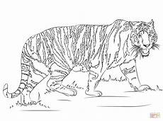 Ausmalbilder Erwachsene Leopard Walking Tiger Coloring Page Free Printable Coloring Pages